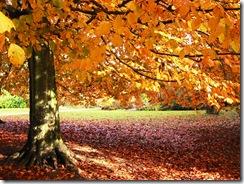 carta - outono