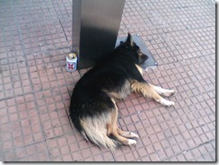 cão bebado na Lapa