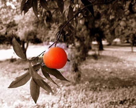 laranjeira