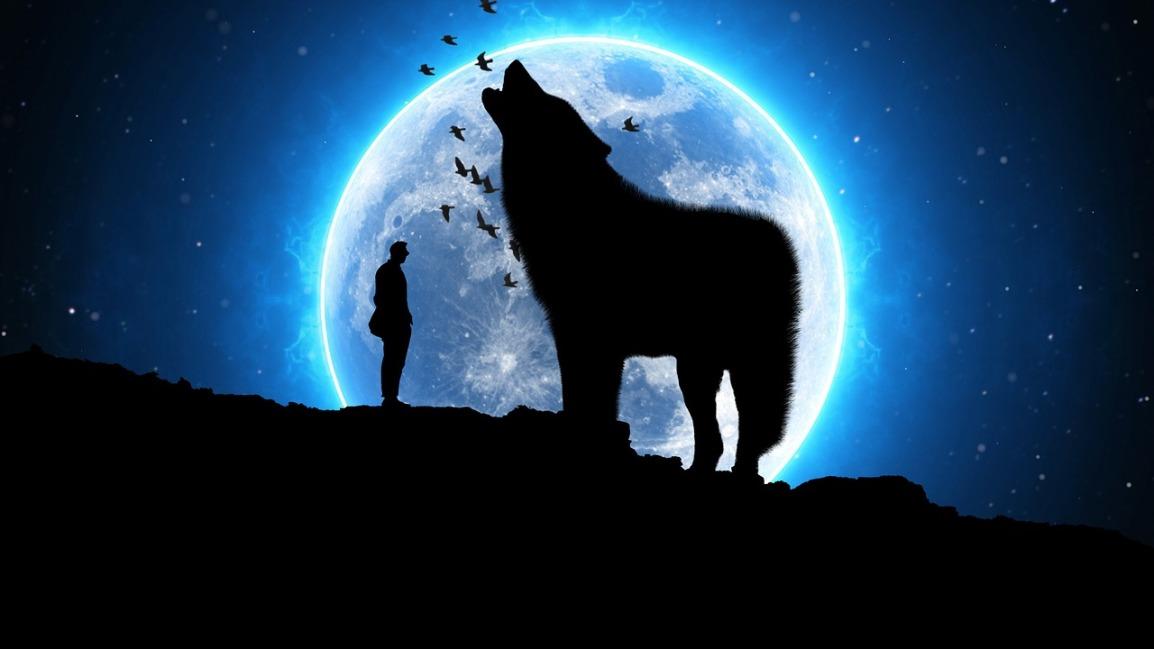Qual lobo vocêalimenta?